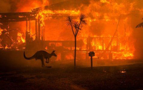 Australia In Flames